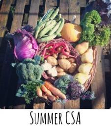summer csa2