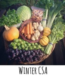 winter csa2