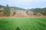 05 nice oat field