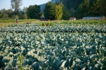 13 farming practices