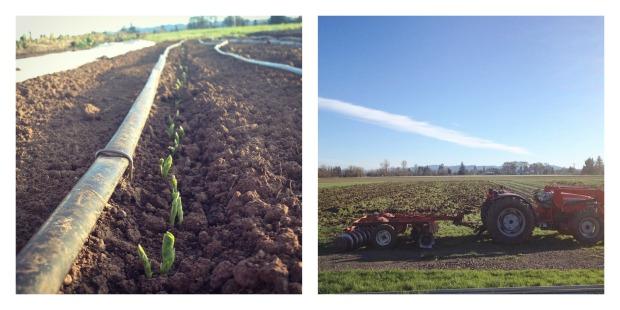 spring farming