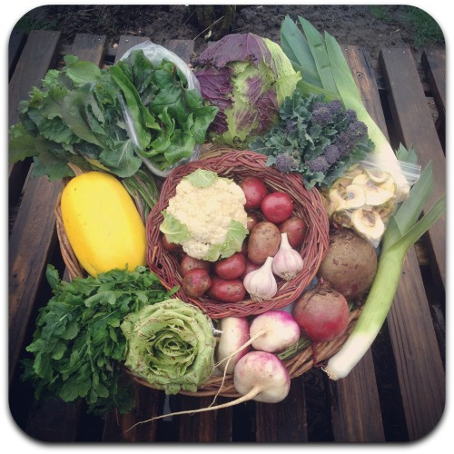 winter csa week 6