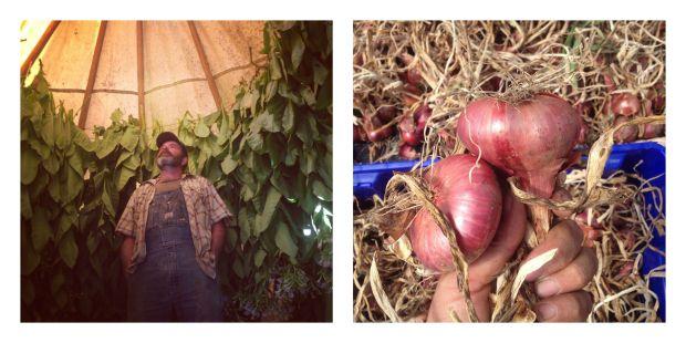 harvests