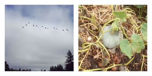 geese and squash