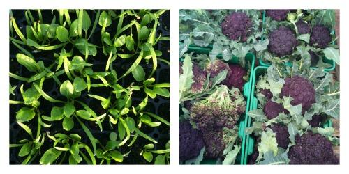 spinach and purple cape