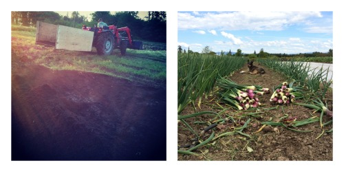 compost and onions