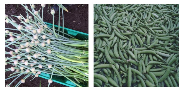 scapes and peas