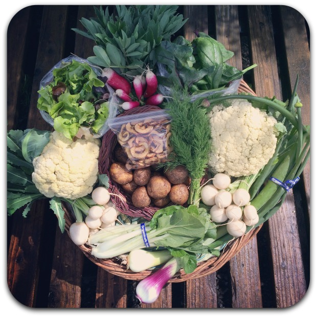 winter csa share week 12