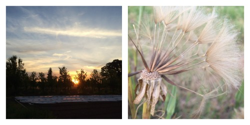 sunset and seeds