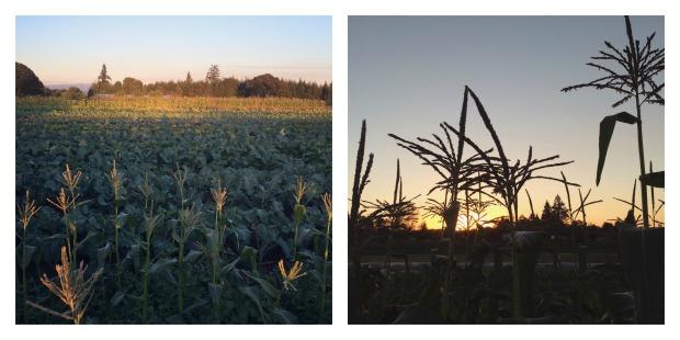 fall-fields