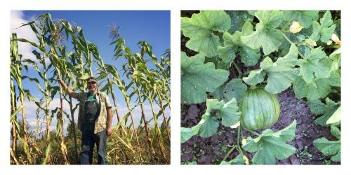 corn-and-pumpkin