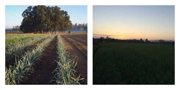 leeks-and-sunrise