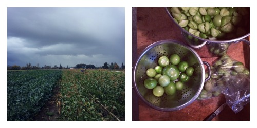 storms-and-tomatillos