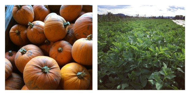 pumpkins-and-favas