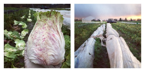 castelfranco-and-row-cover