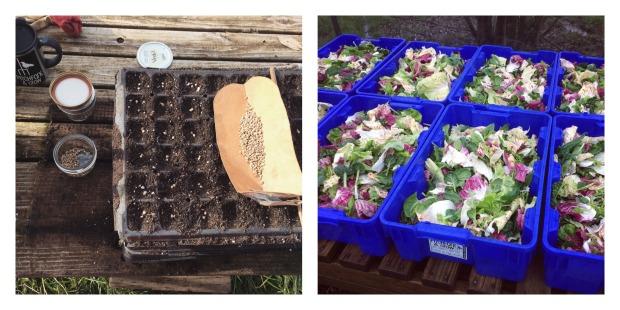 seeding-and-harvesting