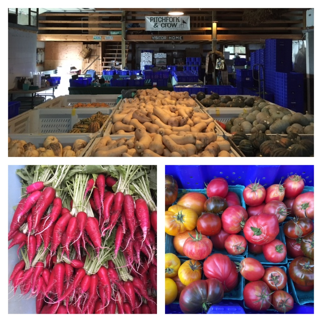 Photo of winter squash in the barn above a photo of long pink radishes and a photo of tomatoes.
